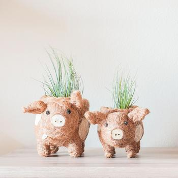 商品Baby Pig Succulent Pot Handmade Planters图片