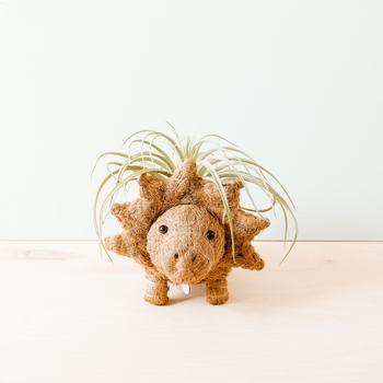商品Triceratops Planter Coco Coir Pots图片